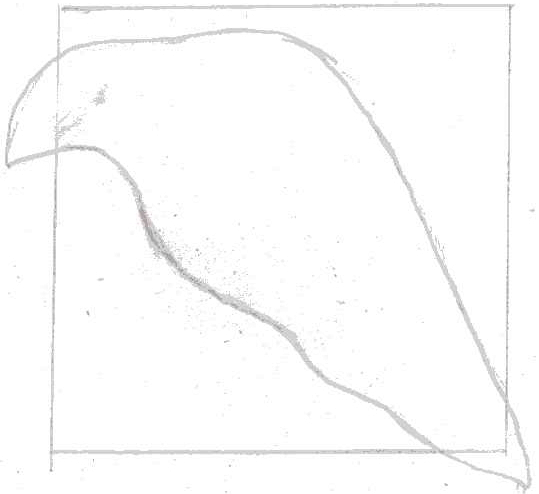 pencil sketch of the leaf beyond rectangle
